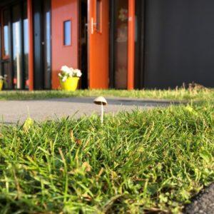 margreet paddenstoel 4